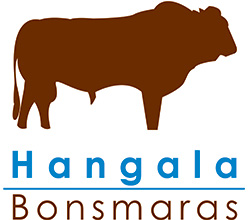 Hangala Bonsmaras